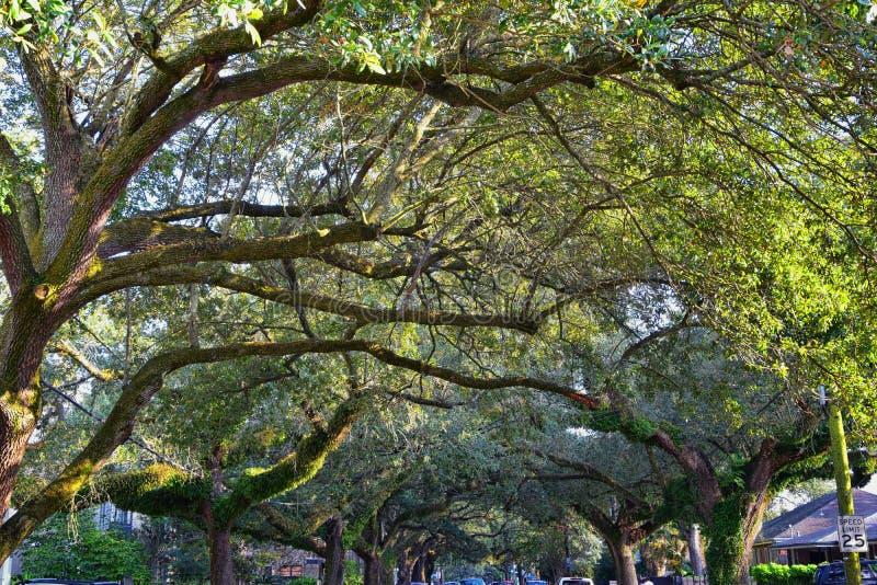 Meningen van bomen en unieke aardaspecten die New Orleans, met inbegrip van het wijzen van op pools in begraafplaatsen en het Tui stock foto