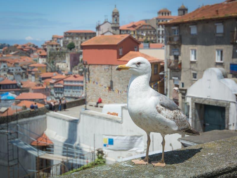 Meningen van de Rivier Douro en gebouwen van Porto stock afbeeldingen