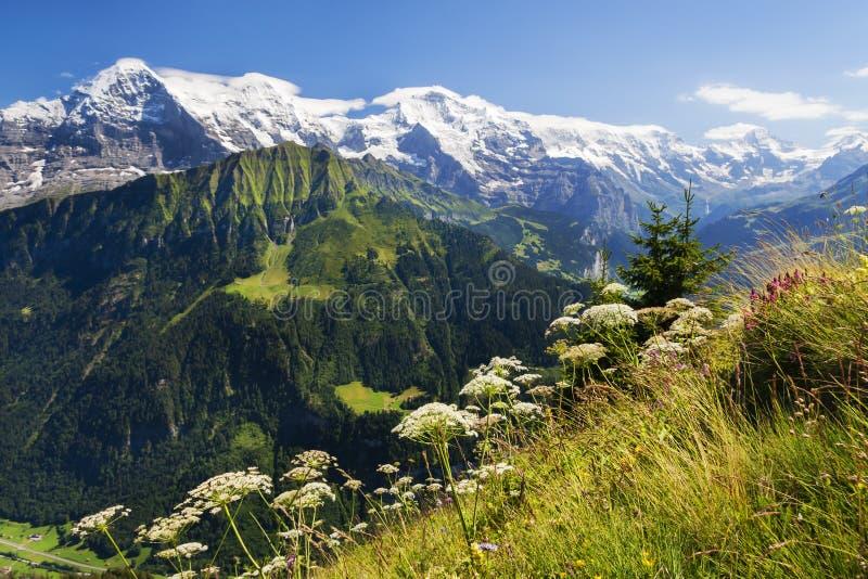 Meningen van Eiger, Mönch en Jungfrau van Schynige Platte, Zwitserland stock foto's
