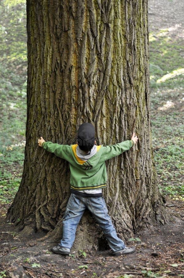 Menino & árvore imagens de stock