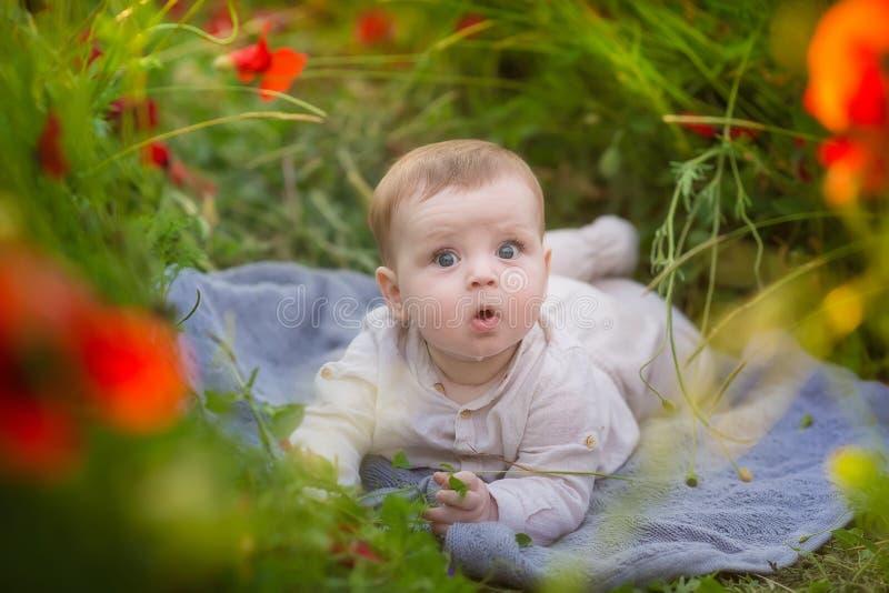 Menino adorável do bebê que joga com as flores vermelhas da papoila em um campo de trigo Bebê que levanta no chapéu retro rústico foto de stock royalty free