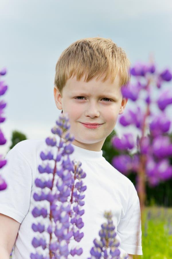Menino bonito em flores do lupine. fotos de stock