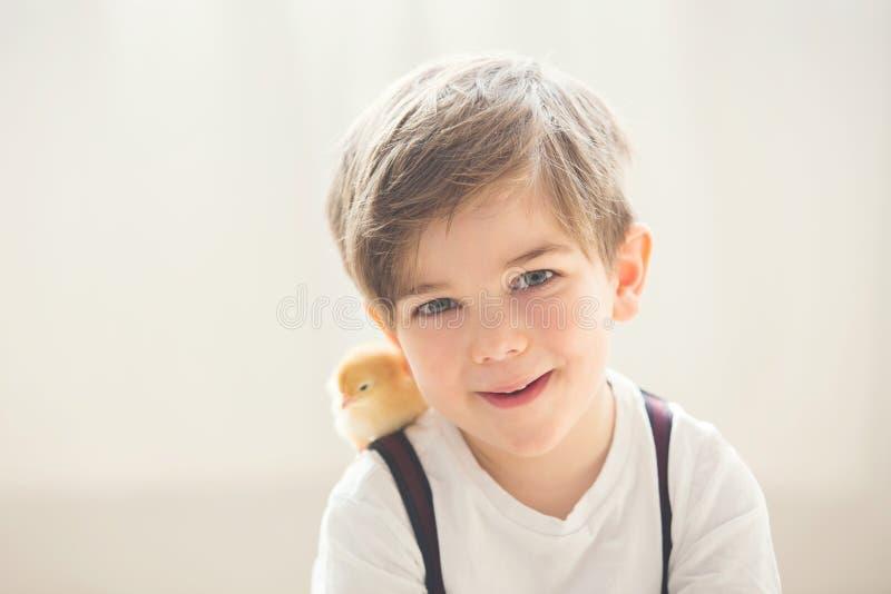Menino bonito novo do prechool, jogando com o pintainho recém-nascido pequeno imagem de stock royalty free