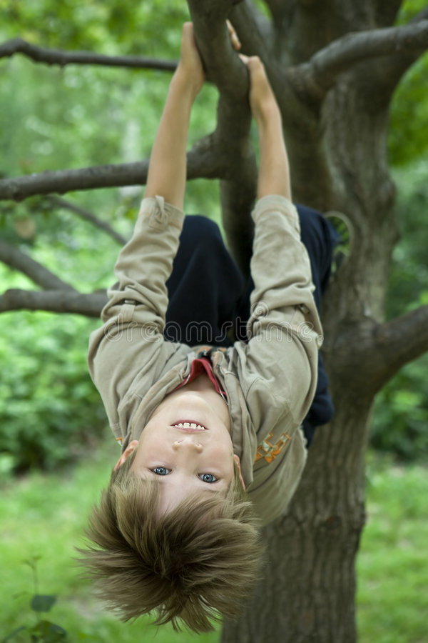 Menino bonito que pendura da filial da árvore imagens de stock