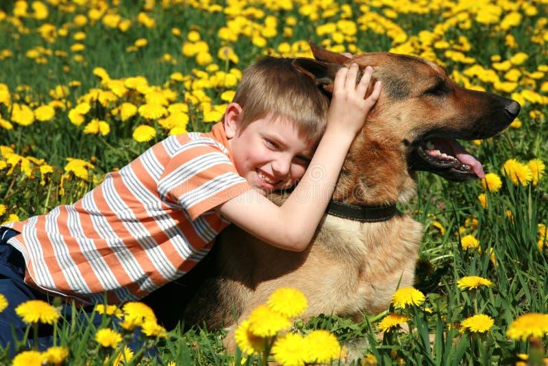 Menino, cão e prado amarelo. fotos de stock