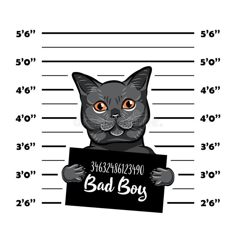 Menino cinzento do mau do gato Criminoso do gato Foto da apreensão Registros da polícia Prisão do gato Fundo do mugshot da políci ilustração royalty free