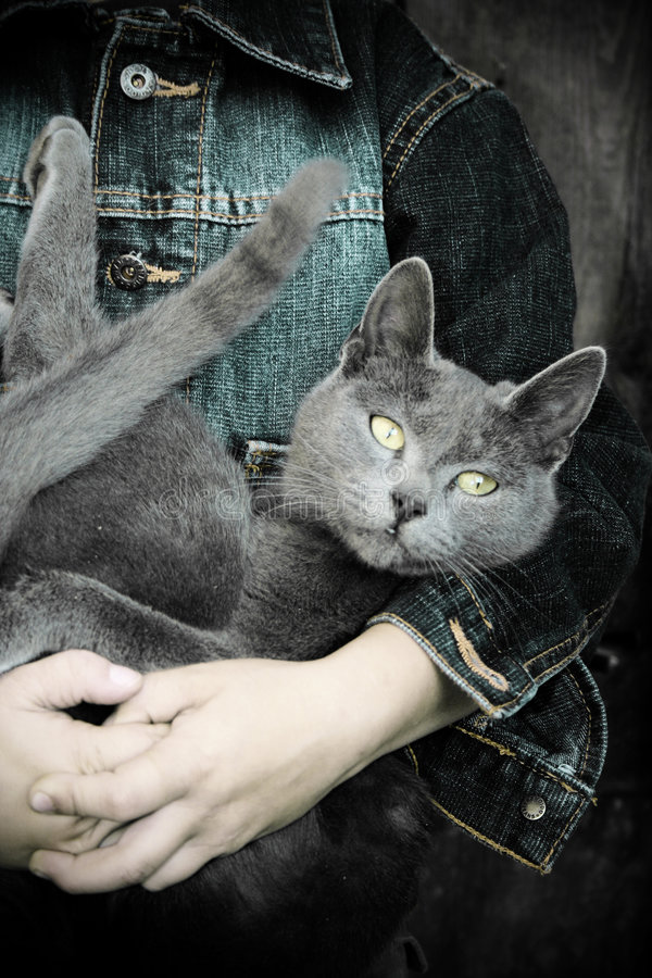 Menino com gato foto de stock