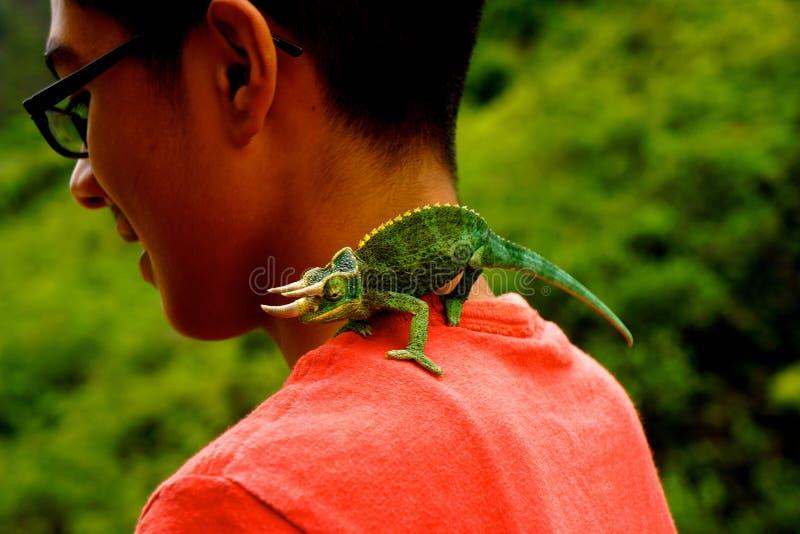 Menino com o lagarto horned do camaleão na selva imagens de stock royalty free