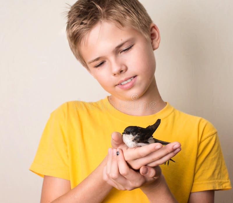 Menino com o pássaro ferido da andorinha em suas mãos perto acima Salvamento selvagem imagem de stock