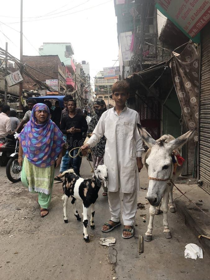 Menino com seus cabra e asno na Índia fotografia de stock
