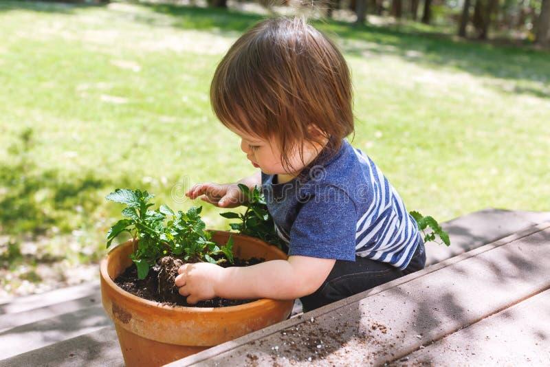Menino da criança que ajuda a plantar plantas em um jardim imagem de stock