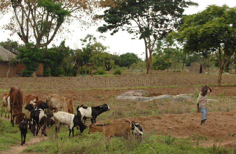 Menino de exploração agrícola africano imagens de stock royalty free