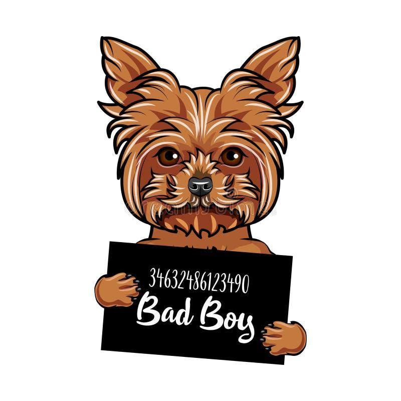 Menino do mau do cão do yorkshire terrier Criminoso do cão Fundo do mugshot da polícia Prisão do yorkshire terrier Cão prendido V ilustração royalty free