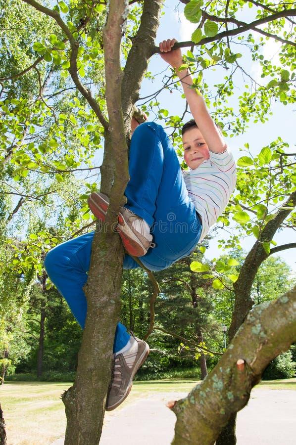 Menino do ute do ¡ de Ð que escala na árvore fotos de stock royalty free