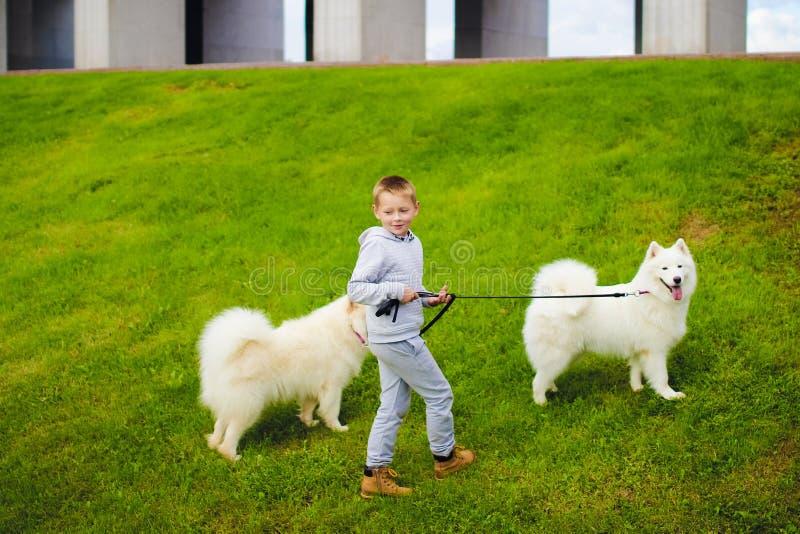 Menino e cães imagens de stock