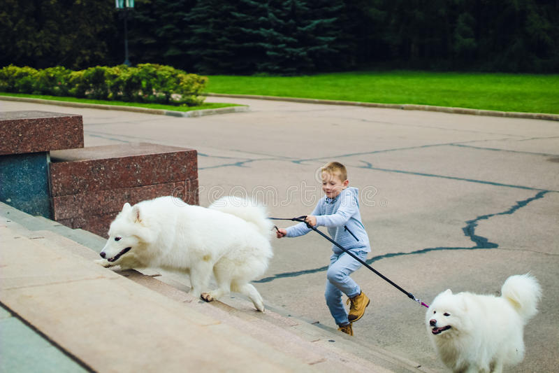 Menino e cães imagem de stock royalty free