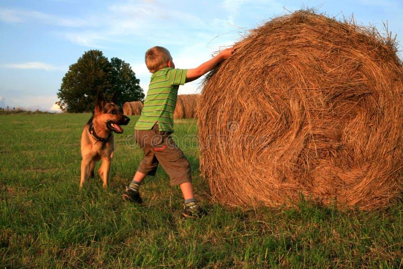 Menino e cão fotografia de stock