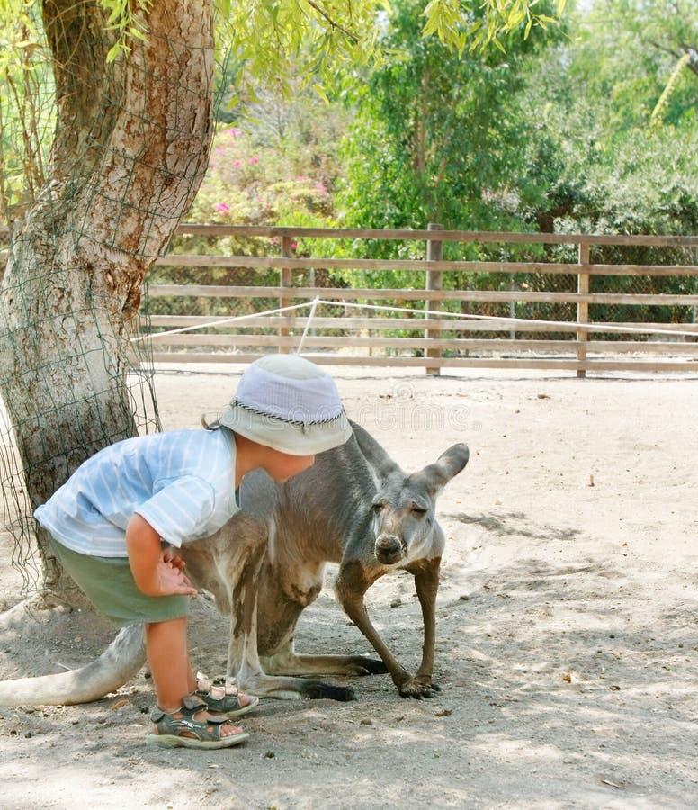Menino e canguru no jardim zoológico imagem de stock royalty free