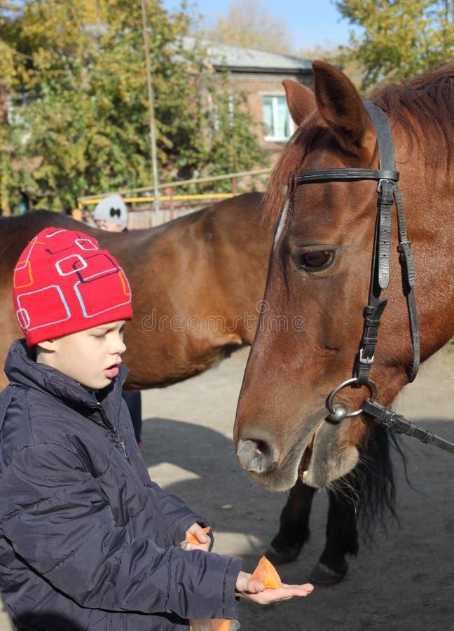 Menino e cavalo foto de stock
