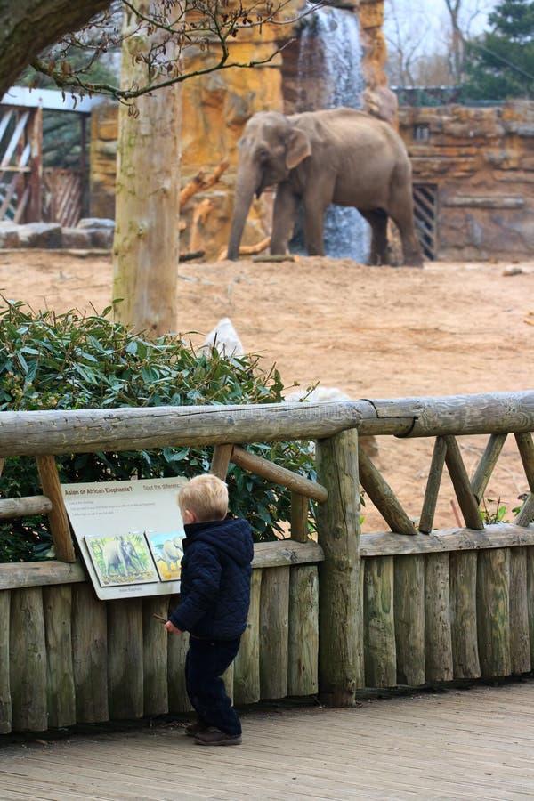 Menino e elefante imagem de stock