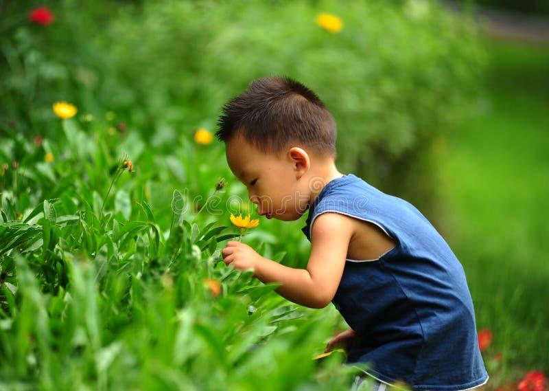 Menino e flores asiáticos pequenos imagem de stock royalty free