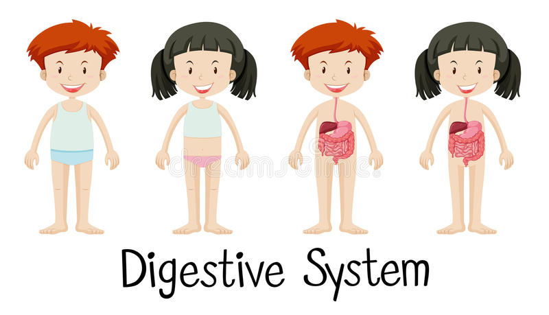 Menino e menina com sistema digestivo ilustração do vetor