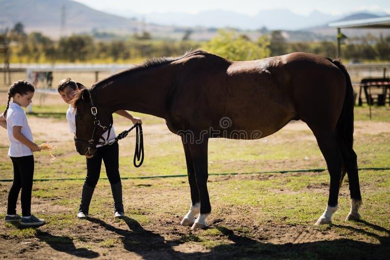 Menino e menina que guardam as rédeas e que olham o cavalo imagens de stock royalty free