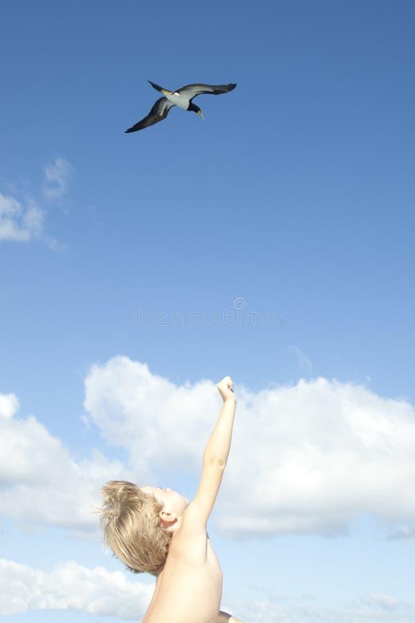 Menino e pássaro imagens de stock