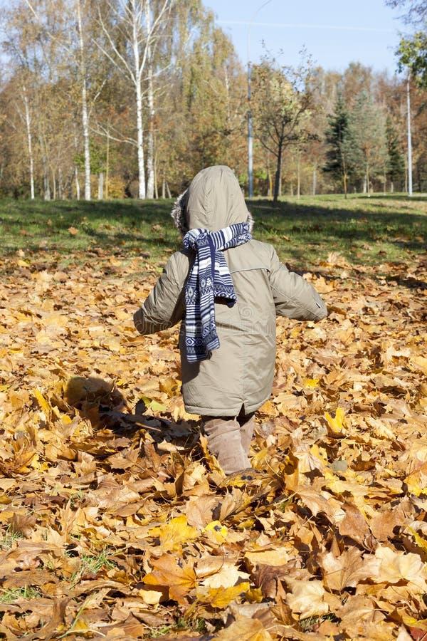 Menino em caminhadas do parque do outono fotografia de stock royalty free