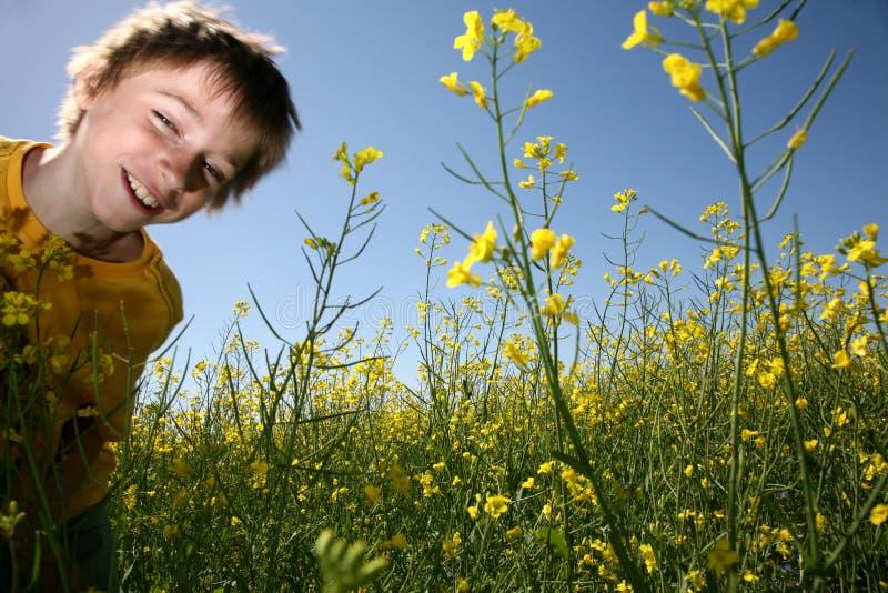 Menino feliz no campo amarelo imagem de stock royalty free