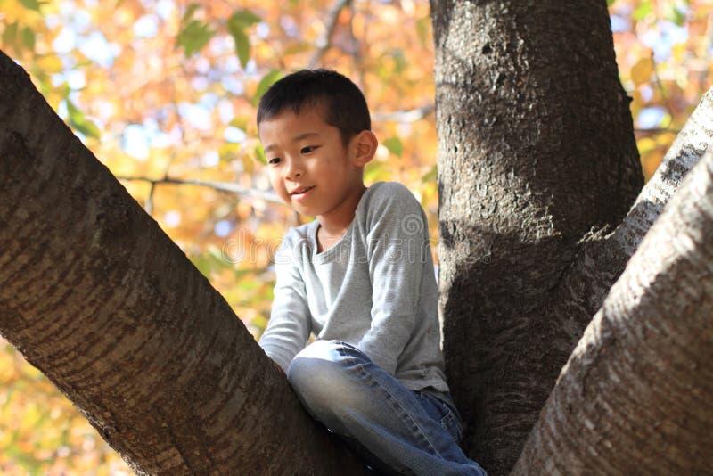 Menino japonês que escala a árvore fotografia de stock royalty free