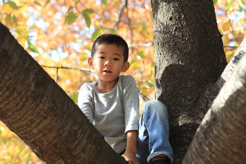 Menino japonês que escala a árvore imagem de stock