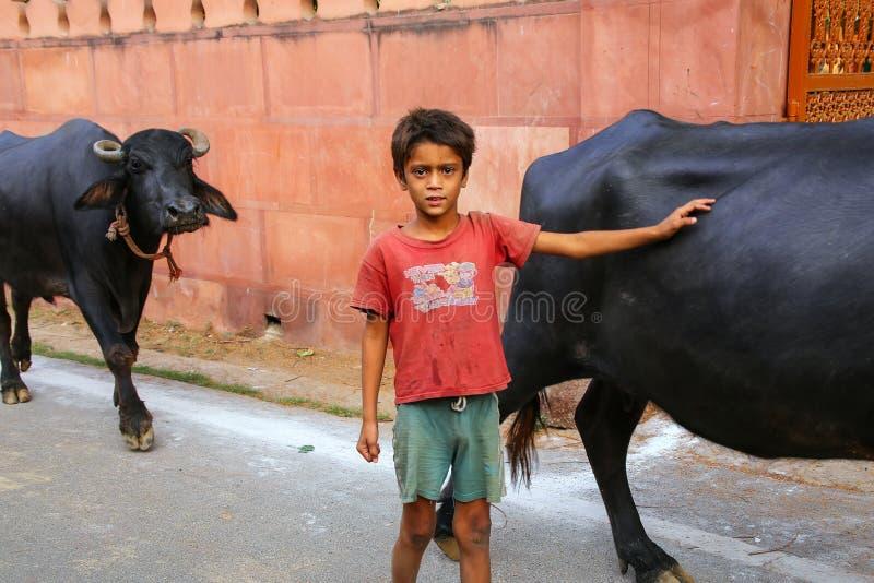 Menino local que anda com o búfalo de água fora do comple de Taj Mahal fotos de stock