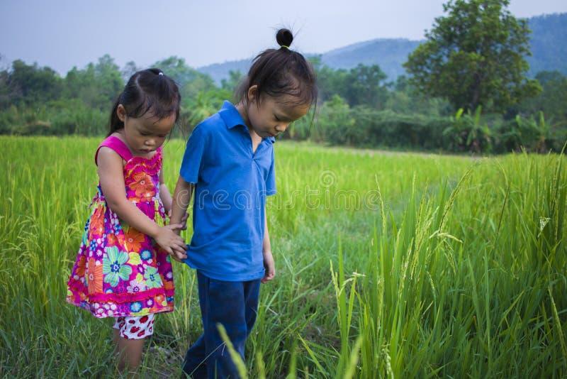 Menino longo e menina do cabelo que jogam no campo do arroz e uma menina ela assustado um enlameado imagem de stock
