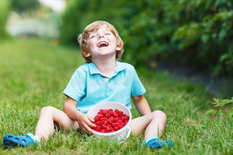 Menino louro pequeno feliz sobre sua colheita na exploração agrícola da framboesa fotografia de stock