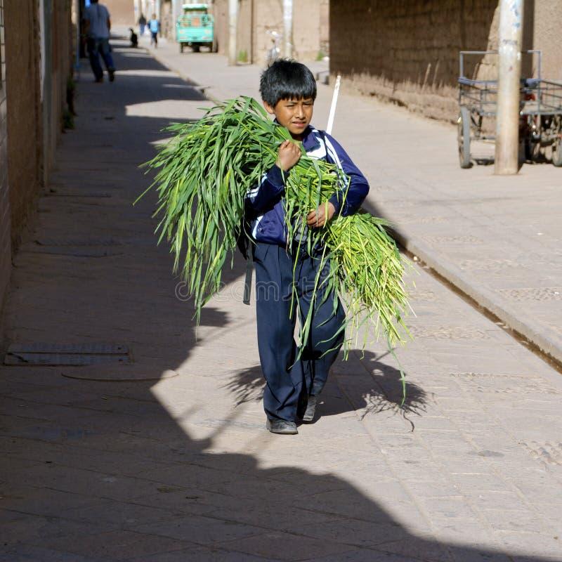 Menino nativo, Peru imagem de stock