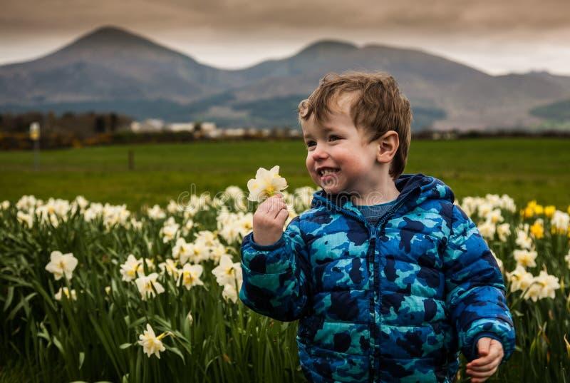 Menino no canteiro de flores dos narcisos amarelos fotos de stock