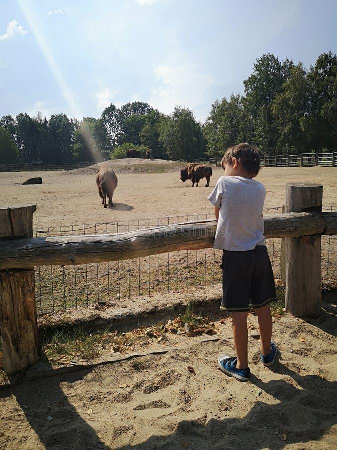 Menino no jardim zoológico fotografia de stock royalty free