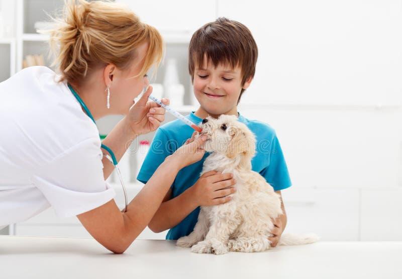 Menino no veterinário com seu cão imagens de stock