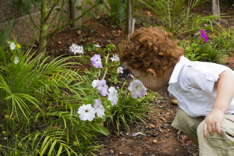 Menino novo em flores de cheiro do jardim imagens de stock royalty free