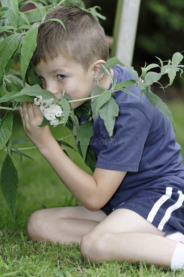 Menino novo em flores de cheiro do jardim imagem de stock royalty free