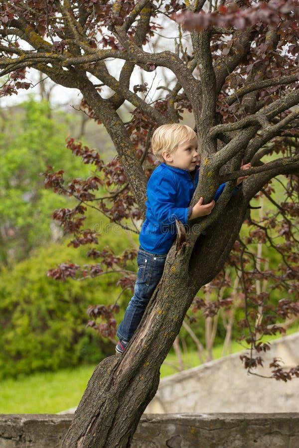 Menino novo que abraça um ramo de árvore fotos de stock