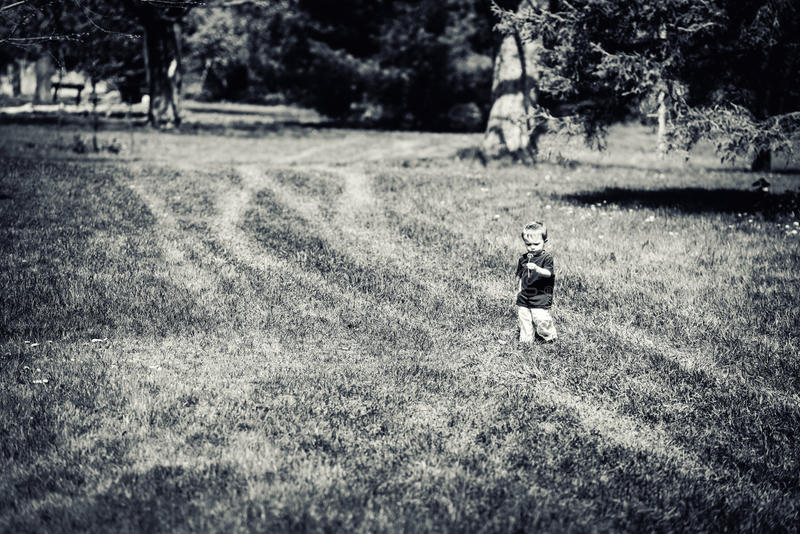 Menino novo que anda em um parque que guarda uma flor do dente-de-leão - enegreça a imagens de stock