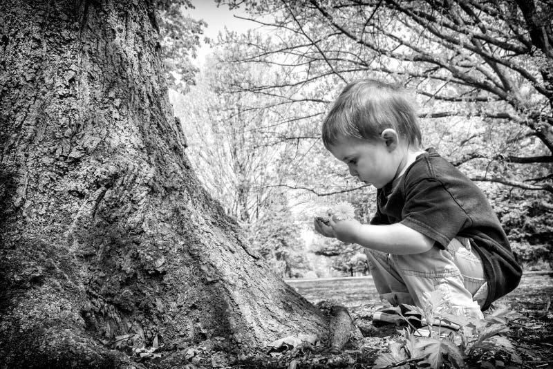 Menino novo que olha o galho em suas mãos - preto e branco fotografia de stock