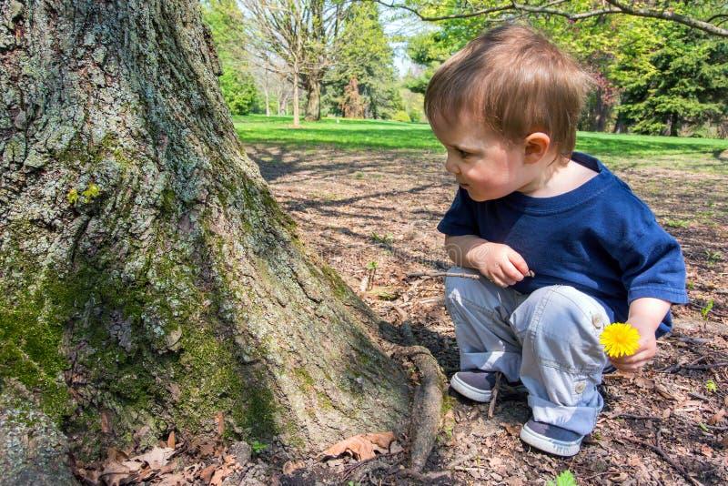 Menino novo que olha uma árvore imagens de stock