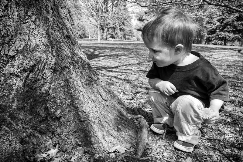 Menino novo que olha uma árvore - preto e branco fotografia de stock royalty free