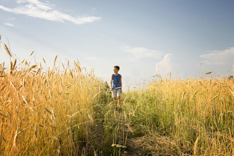 Menino que anda através do campo de trigo dourado imagem de stock