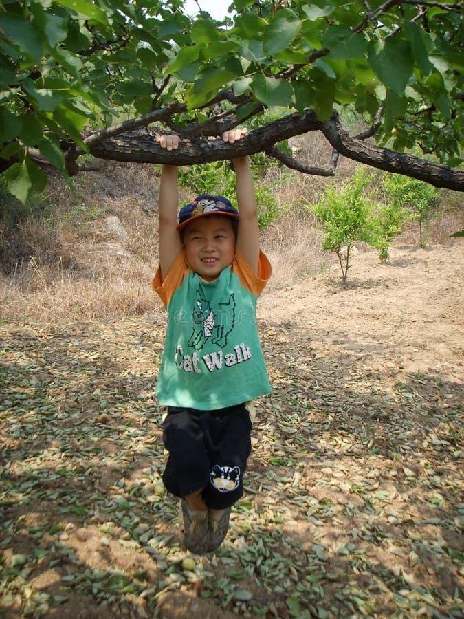 Menino que balança sob uma árvore fotografia de stock royalty free