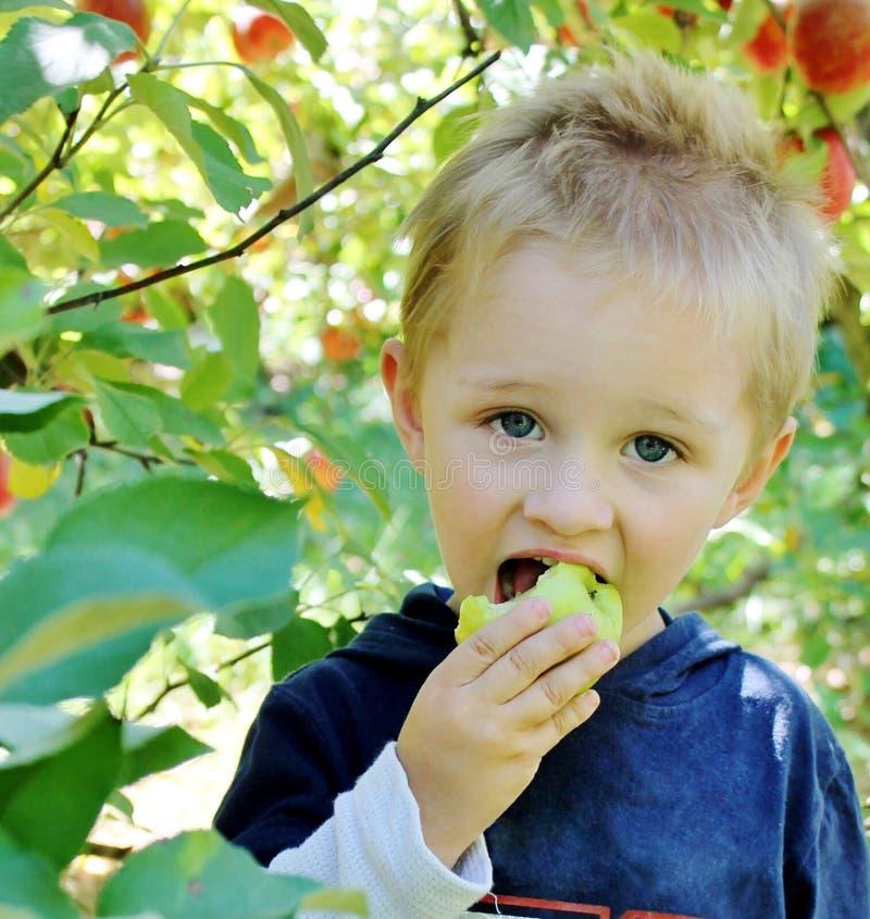 Menino que come uma maçã imagem de stock royalty free