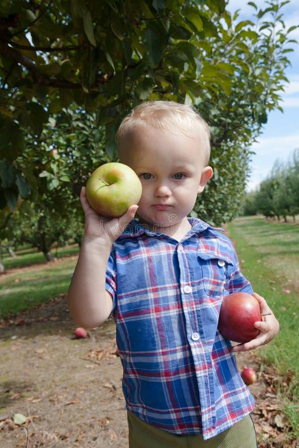 Menino que guarda maçãs vermelhas e verdes fotos de stock